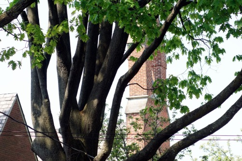Steeple through trees