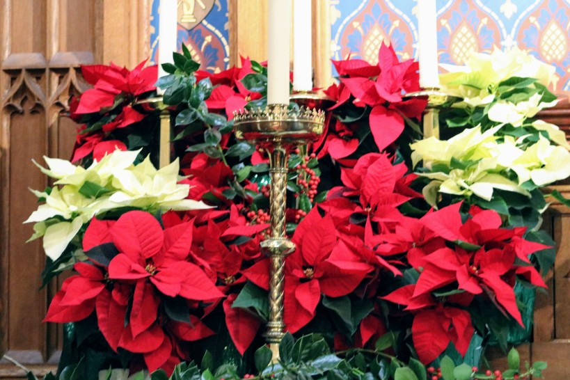 Poinsettias for Christmas Email 2018